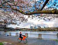 Springtime at Portland's Waterfront Park