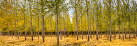 Oregon's Boardman Tree Farm