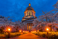 Nighttime turns the  state capitol into a fairyland of daffodils and cherry blossoms