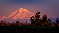 "Did I hear someone say ""Alpenglow on Mount Hood""?"